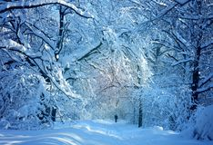 Winter photo landscape. With snow-covered trees in the park Stock Photo