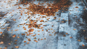 Winter photo with snow and leafs on road traces Royalty Free Stock Images