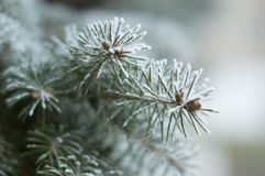 Winter. A photograph of abstract content Royalty Free Stock Photography
