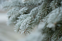 Winter. A photograph of abstract content Stock Image