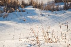 Winter photos of dried grass 1015. royalty free stock photo