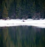 Winter picknick at the lakeshore Royalty Free Stock Photo