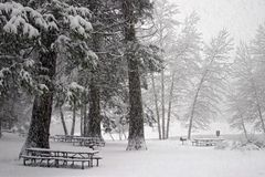 Winter Picnic Royalty Free Stock Photos