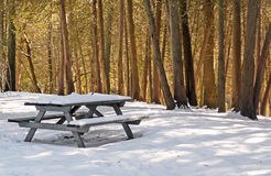 Winter picnic table with sunlit cedars Stock Photo