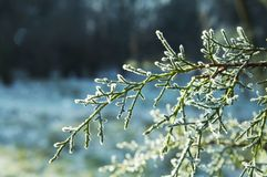 Winter picture Stock Images