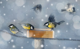 Winter picture with birds Stock Photo
