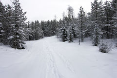Winter. Picture of winter landscape in  Alberta,Canada Royalty Free Stock Photos