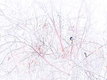 """Winter picture. Titmouse on birch. Winter landscape â""""–2. Winter picture. Titmouse on birch. Winter landscape. Beautiful photo for a winter postcard. White stock image"""