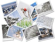 Winter pictures. Collage of scenic photographs depicting winter, isolated on white background Stock Photo