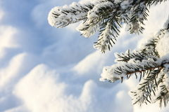 Winter Pictures : snow covered tree - Stock photos Royalty Free Stock Images