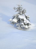 Winter Pictures : snow covered tree - Stock photos Royalty Free Stock Photography