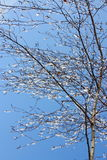 Winter Pictures : tree & icy drops - Stock photos Stock Photos