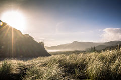 Winter Piha Beach Auckland, New Zealand. Late Afternoon Sun on a Winters Day at Piha Beach, Auckland New Zealand royalty free stock image