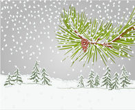 Winter pine branch with snow and pine cone christmas theme vector Stock Images