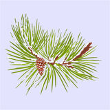 Winter pine branch with snow and pine cone christmas theme vector Royalty Free Stock Image