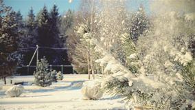 In winter, with pine branches falls beautifully snow stock video footage