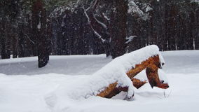 Winter Pine Forest Background with Snow-covered Wood Log stock video footage