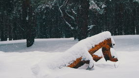 Winter Pine Forest Background with Snow-covered Wood Log stock footage