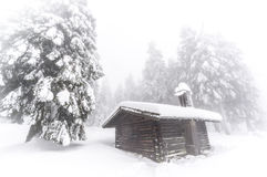 Winter pine forest. In Harz, Germany Stock Photos