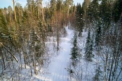 The winter pine forest photographed by the quadcopter from above. The winter pine forest in the sun rays, photographed by the quadcopter from above royalty free stock images