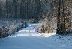 Winter pine forest and road Royalty Free Stock Image