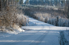 Winter pine forest and road Royalty Free Stock Photo