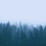 Winter pine forest with snow Stock Images