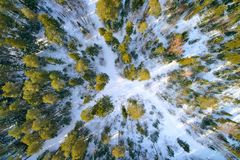 The winter pine forest photographed by the quadcopter from above. The winter pine forest in the sun rays, photographed by the quadcopter from high above royalty free stock photography