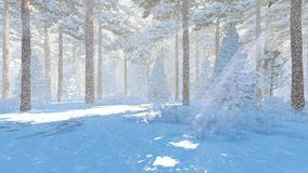 Winter pine forest at sunny day Stock Images