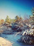 Winter pine instagram stile royalty free stock photography