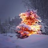 Winter Pine Tree Stock Photography
