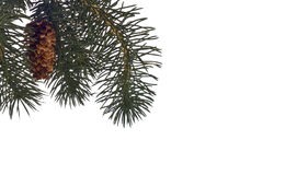Winter Pine Tree Background or Border Stock Photography