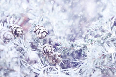 Winter Pine Stock Photo