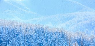 Winter pine trees covered by heavy snow texture. Texture winter mountain vacation panoramic background with pine trees covered by heavy snow with copy space Royalty Free Stock Photography