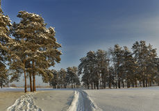 Winter pines road. Stock Photography