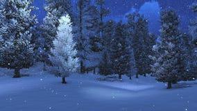 Winter pinewood at snowfall night Stock Images