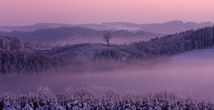Winter pink landscape Royalty Free Stock Images