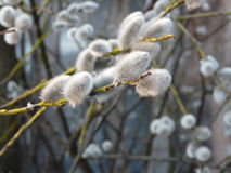 Winter plant. Grey winter plant - nature image Royalty Free Stock Photos