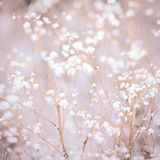 Winter plant background Royalty Free Stock Photos