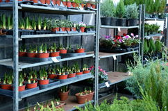 Winter plant sale at Union Square Greenmarket in New York City Royalty Free Stock Photo