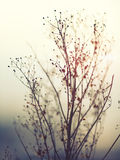 Winter Plant Silhouette Royalty Free Stock Photo