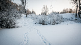 Winter. Plant and trail in the winter stock photo