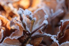 Winter plants are in the snow royalty free stock image