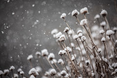 Winter Plants in a Snowstorm Royalty Free Stock Image
