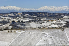 Winter in Piemont, Italy, snowy vineyards Royalty Free Stock Photo