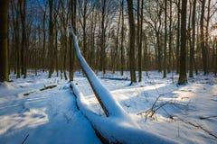 Winter polish forest Stock Photos