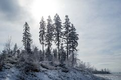 Winter in polish mountains royalty free stock images