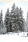 Winter in Polish mountains stock photo