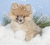 Winter Pom Royalty Free Stock Photo