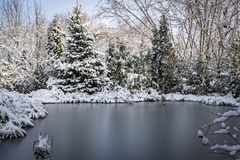Winter pond covered with silver ice. Around the pond there are coniferous trees and spruces. Grass and coastal plants covered with white fluffy snow. Selective stock image